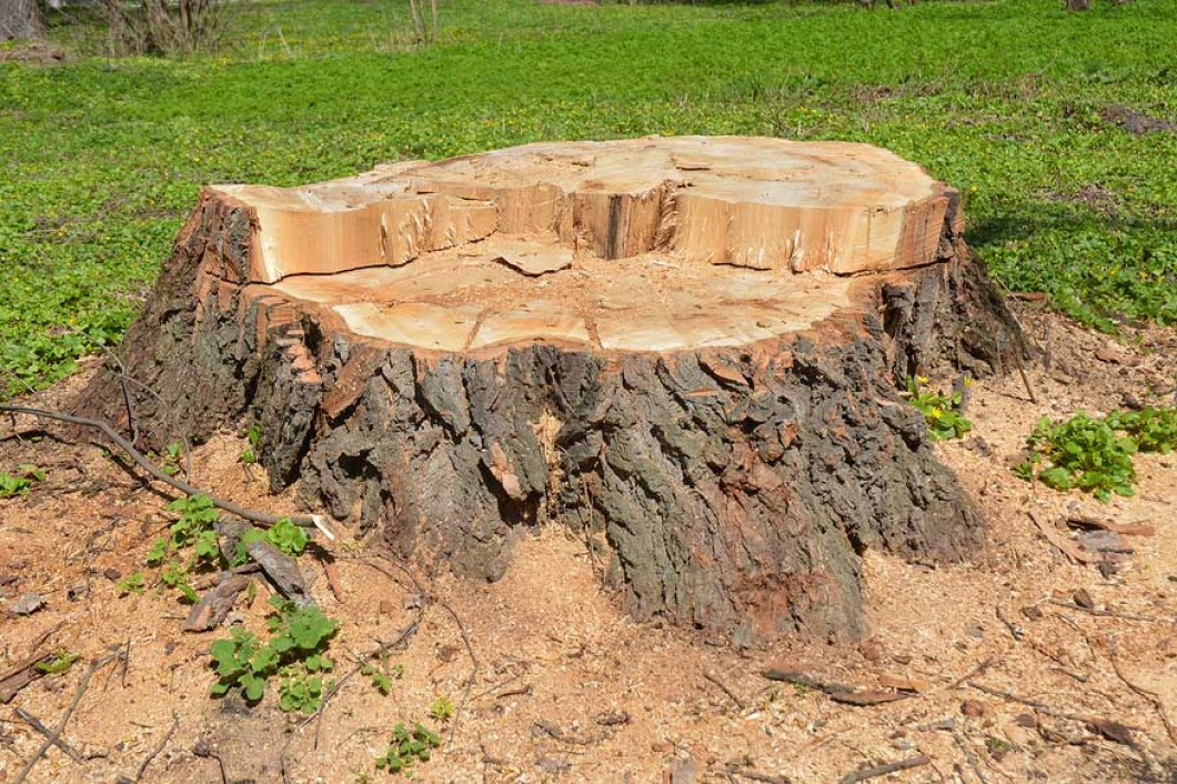 Get Rid of Unsightly Stumps
